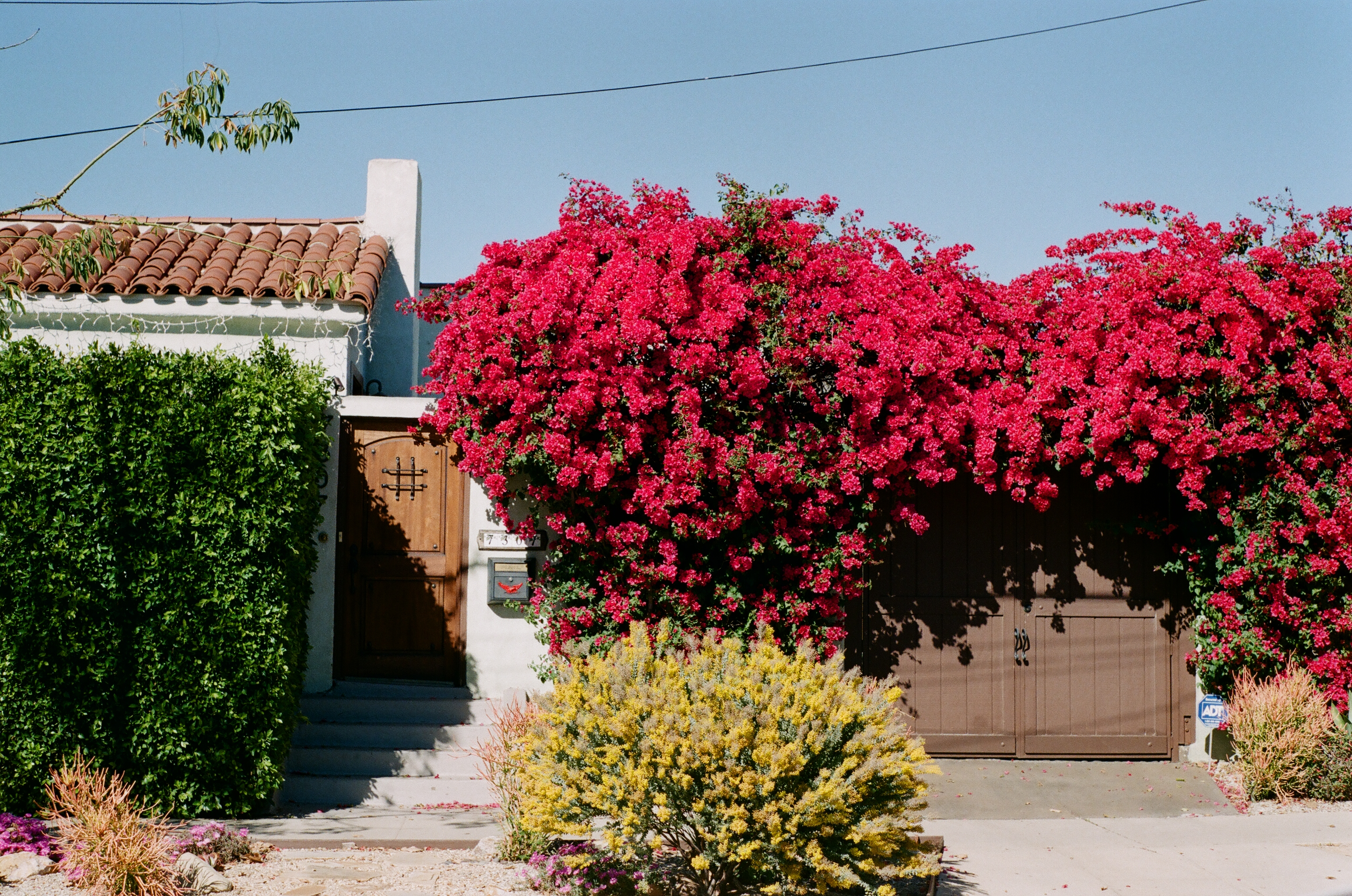 Los Angeles Bougainvillea Analogue Travel Journal