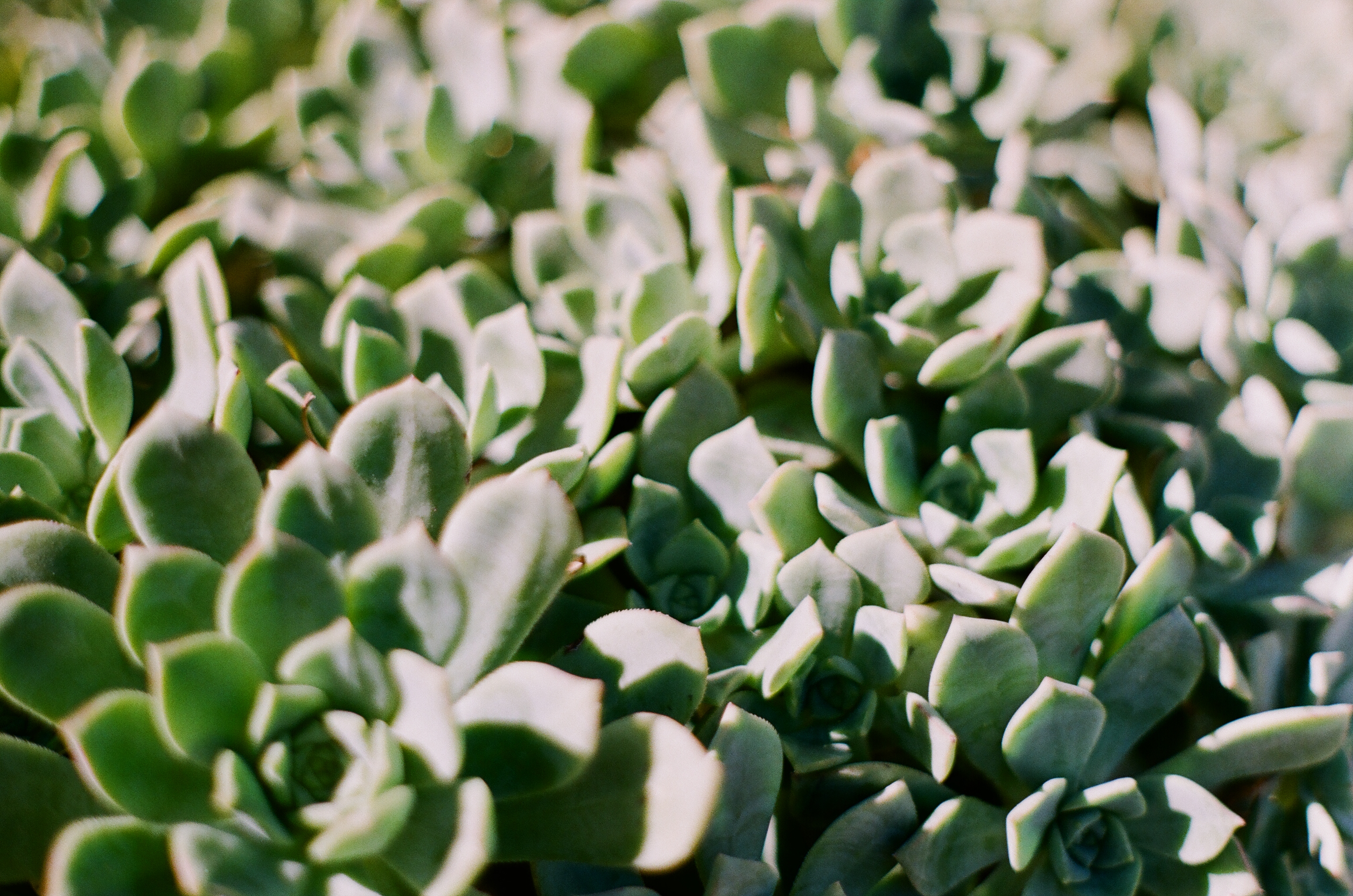 Los Angeles Succulents Analogue Travel Journal