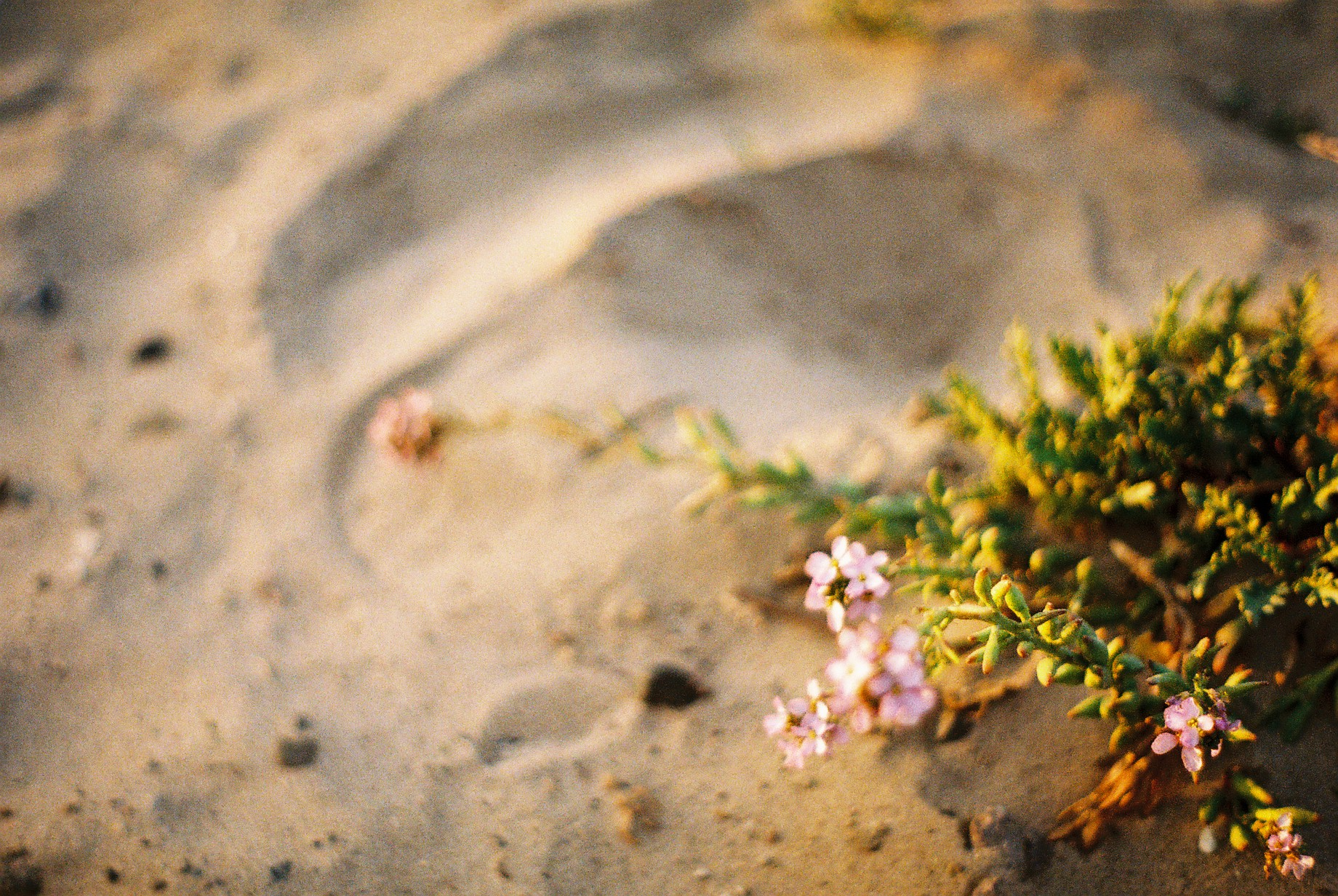 Highway 1 Purple Flowers Analogue Travel Journal