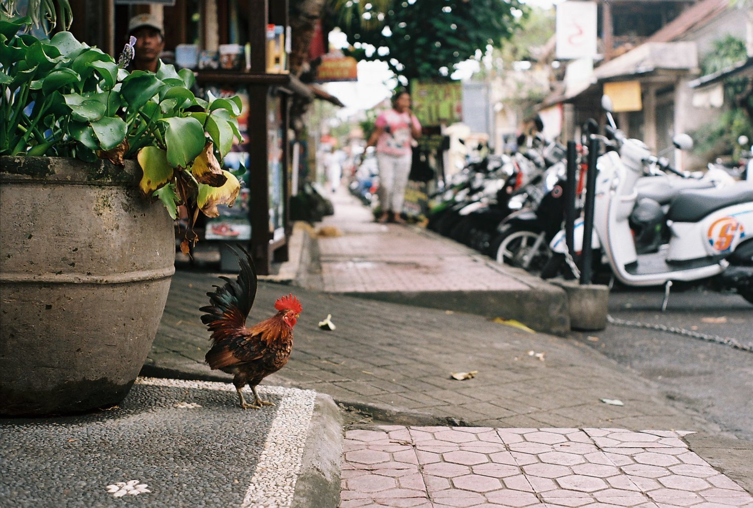Street Chicken Ubud Bali Analogue Travel Photographer