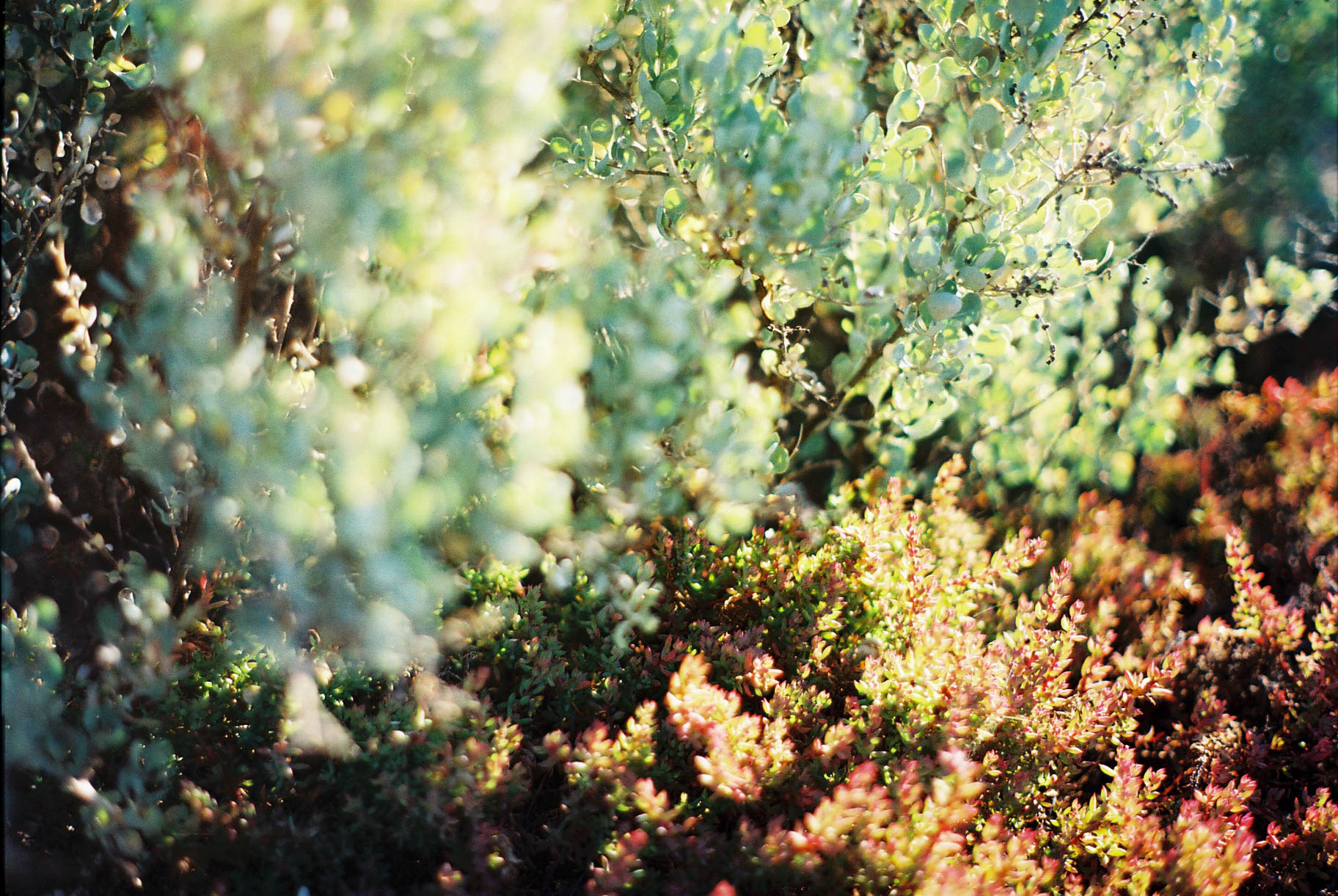 Kalbarri Coastal Walk Foliage Analogue Travel Photographer