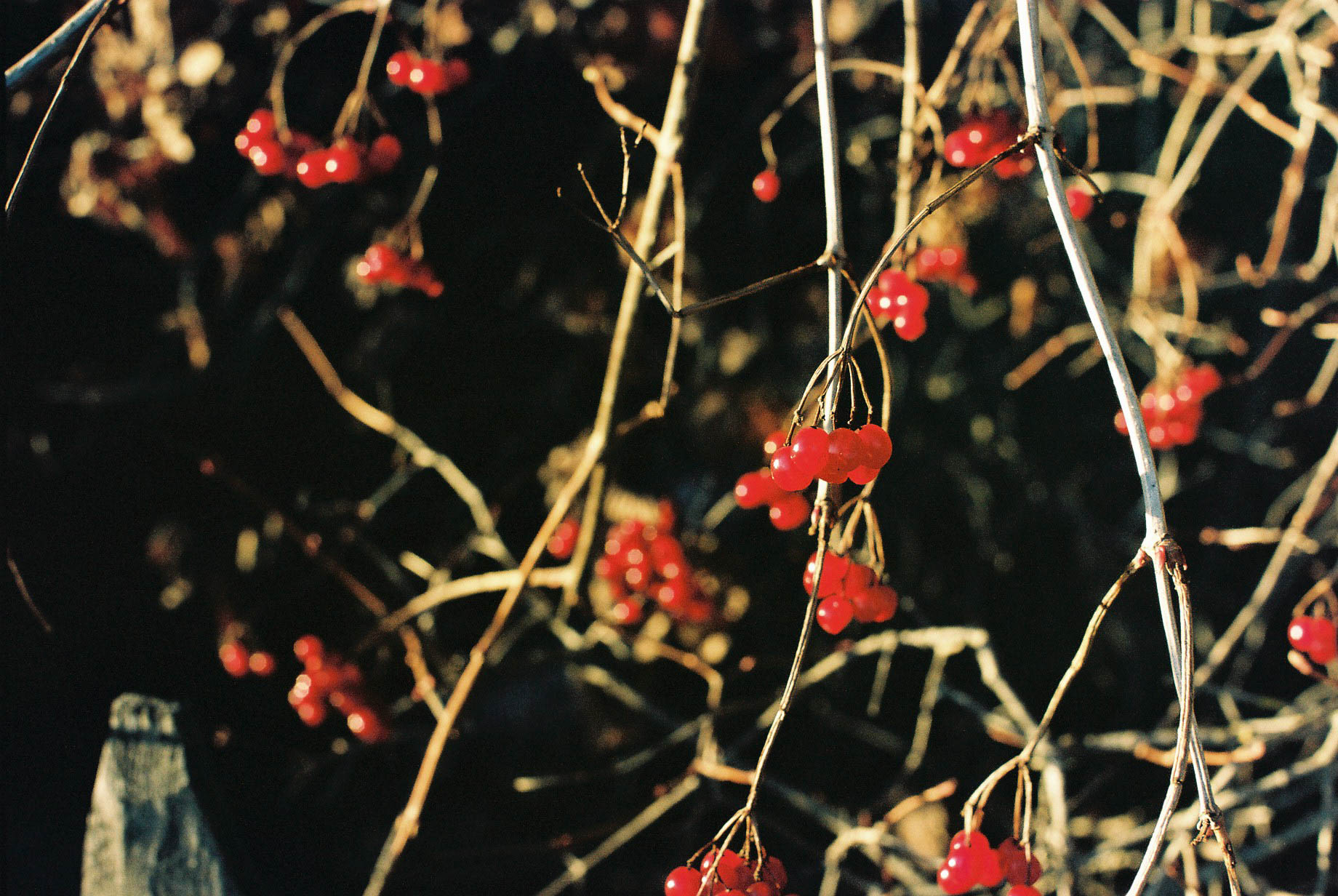Berries Italian Winter Travels Lifestyle Travel Photographer
