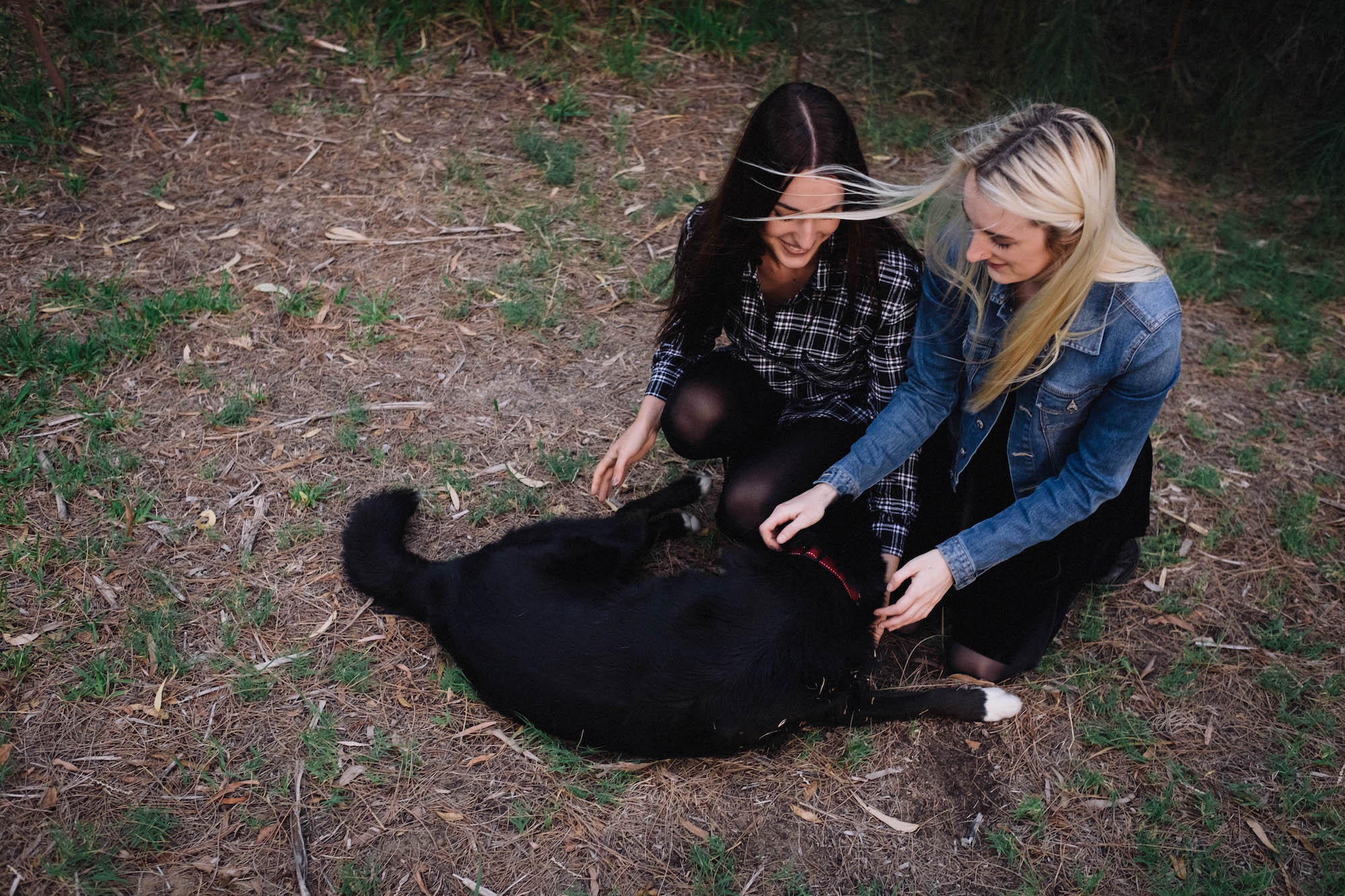 Beaton Park Swan River Family Photographer Dog
