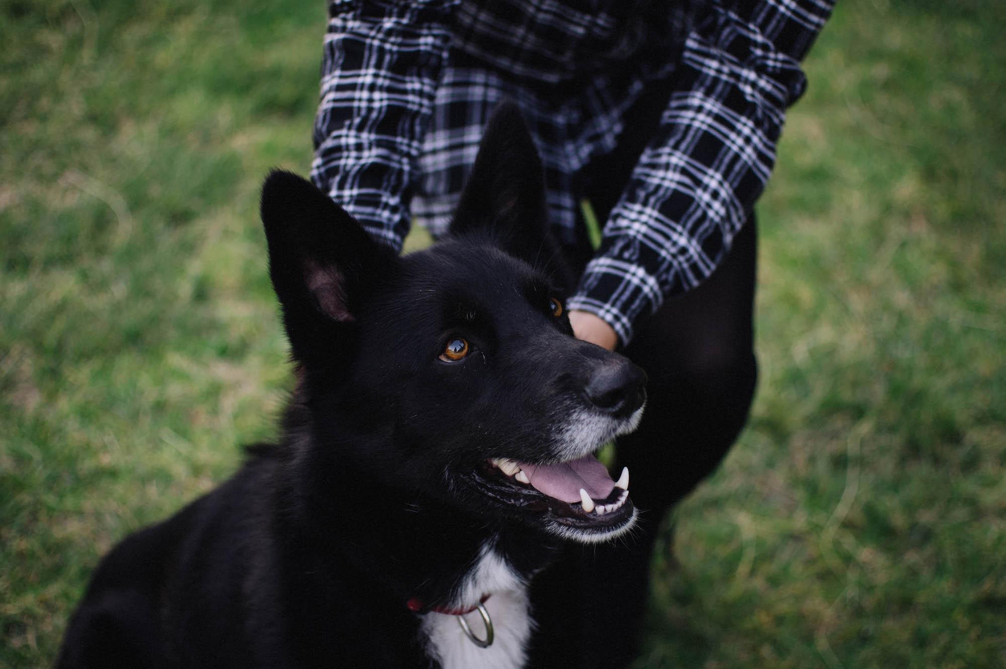 Riverside Family Pet Portraits Perth Photographer