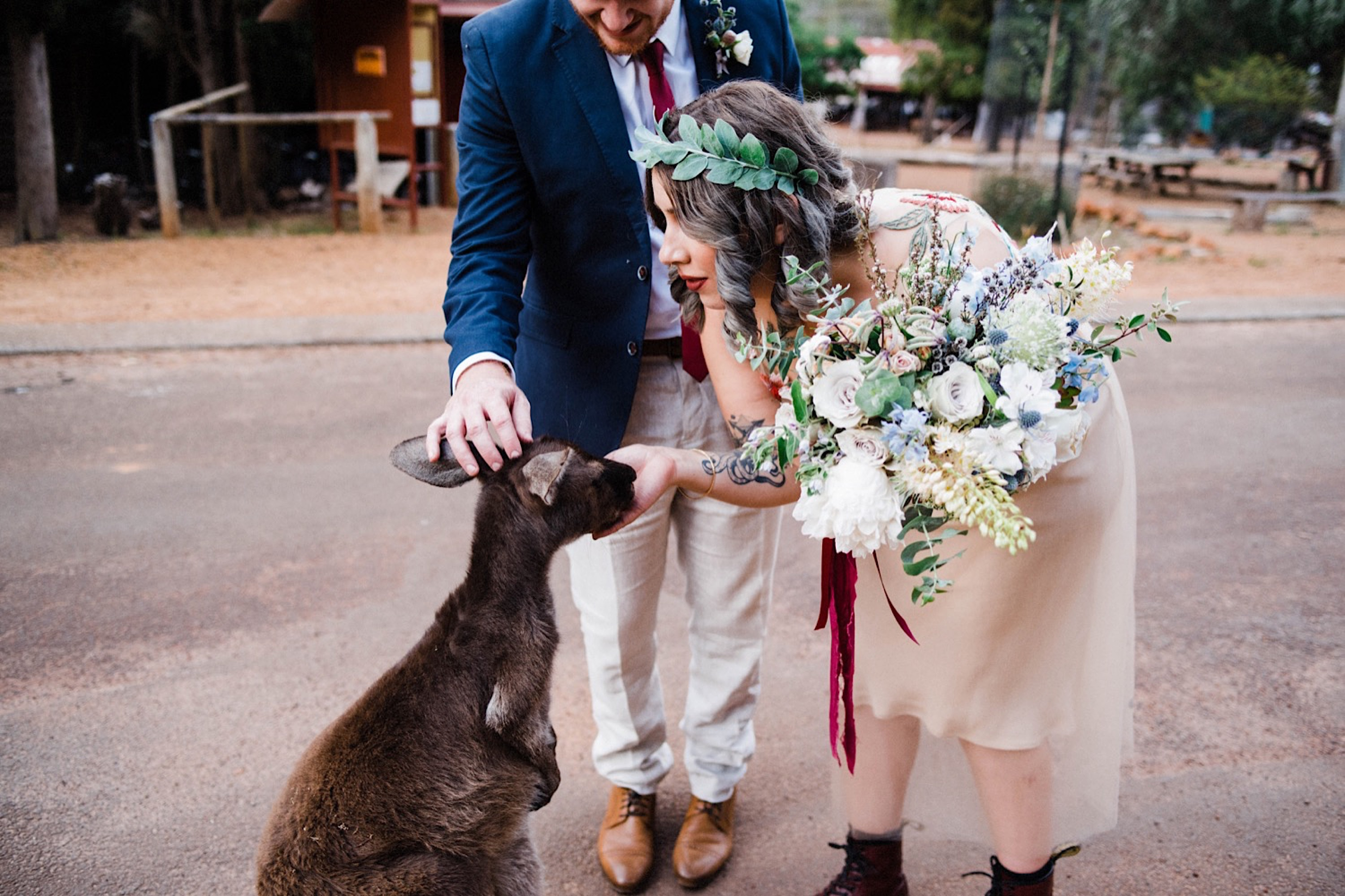 An alternative bride leans down to feed a kangaroo at her Donnelly River Village Wedding.