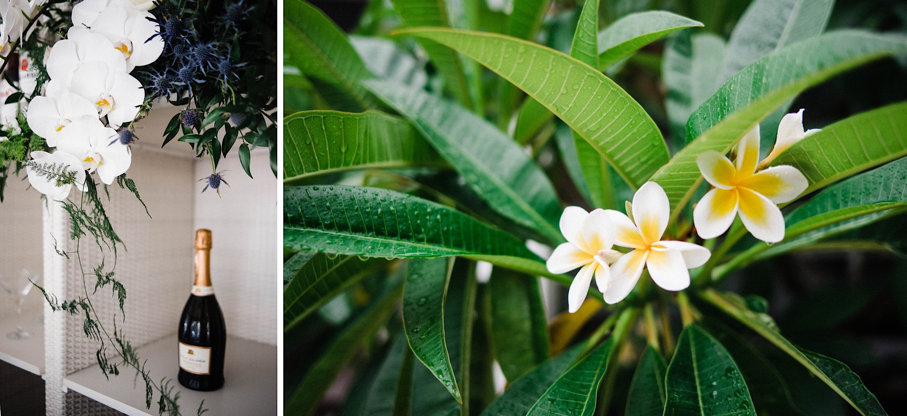Two photos side-by-side from a Sustainable Backyard Wedding. On the left, a bottle of Prosecco and an flower arrangement with no floral foam, and on the right is a picture of the frangipani.