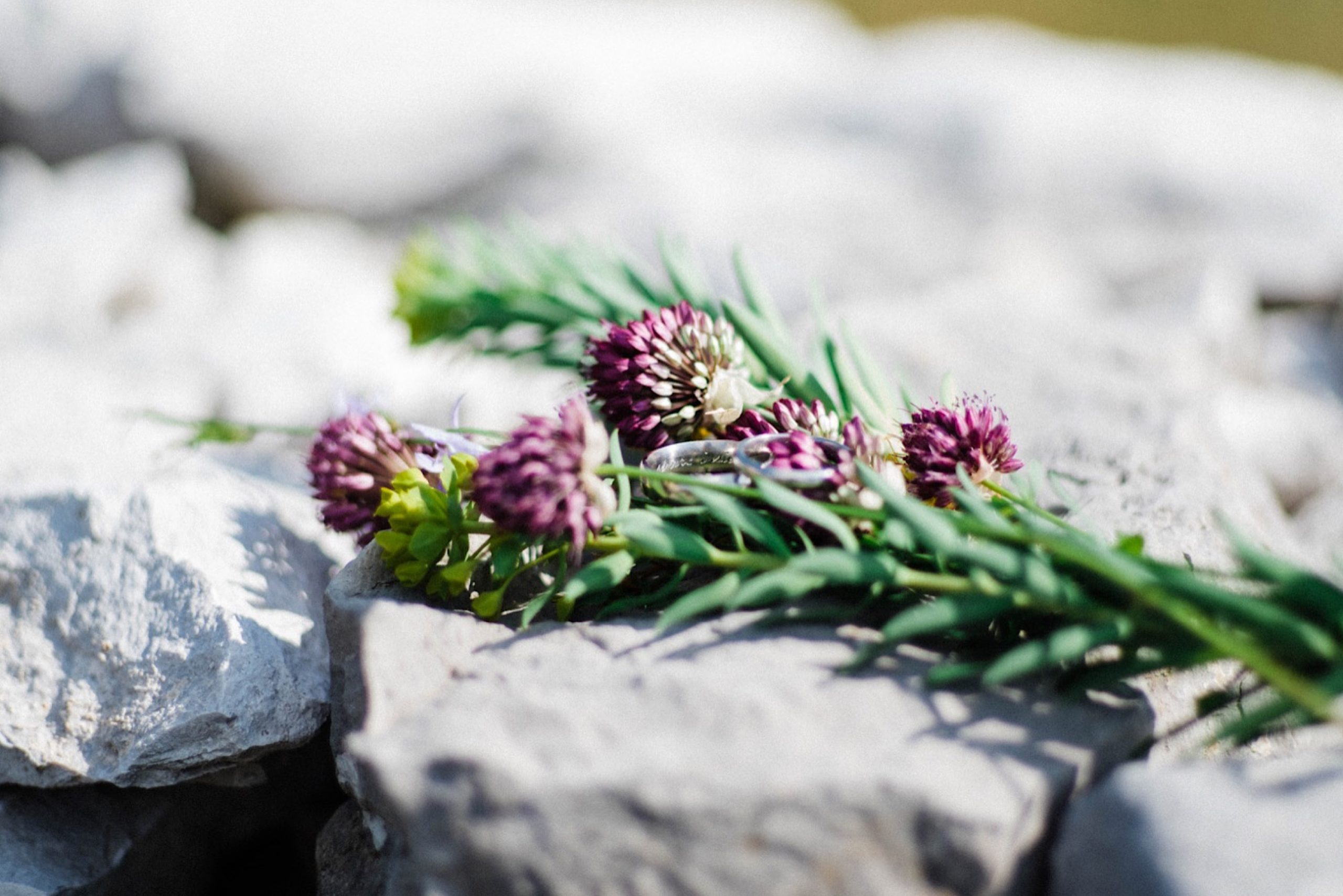 Detail photo of some Slovenian wildflowers and two wedding rings, taking on a farm's stone wall on the Italo-Slovenian border as part of an Italian elopement photography package..