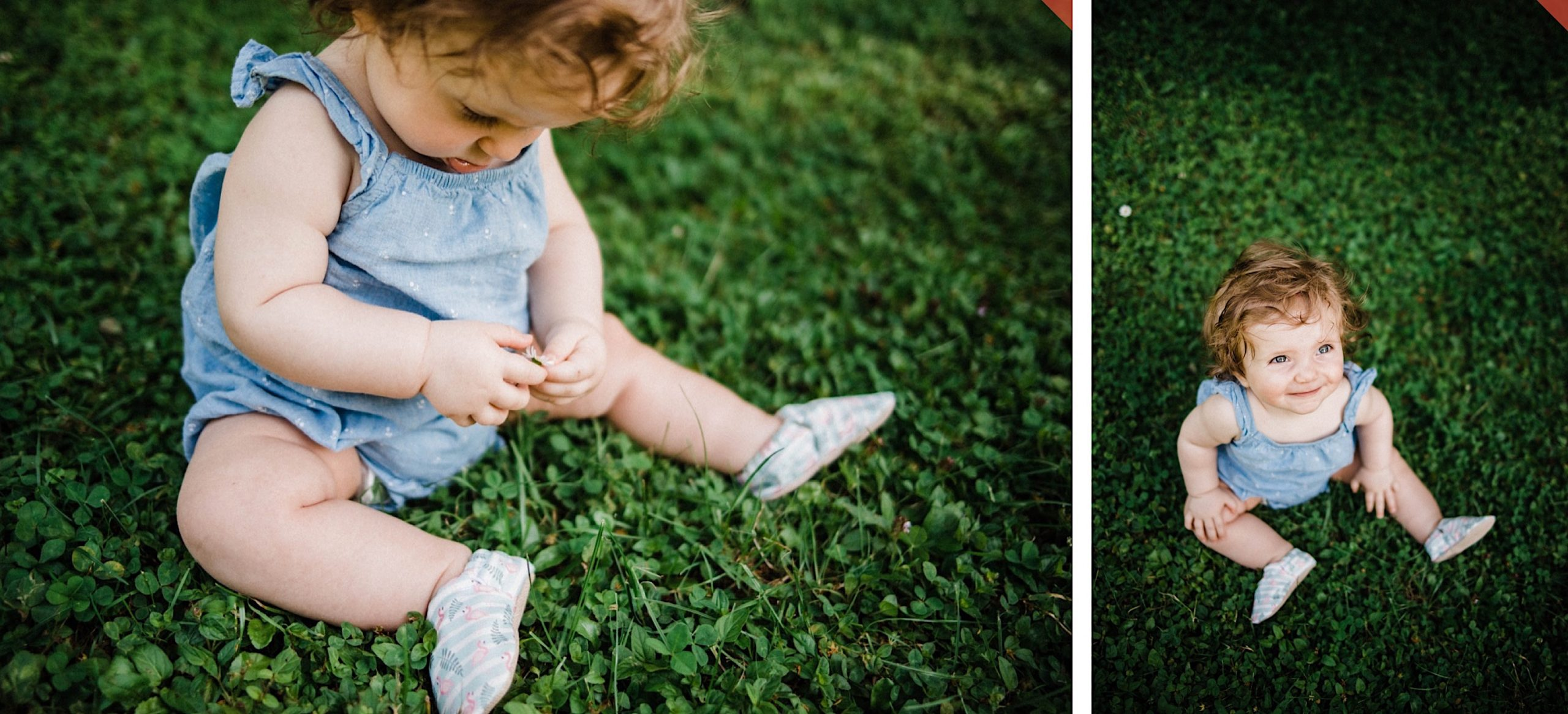 Relaxed Family Portraits of a little girl playing with a daisy at a park.